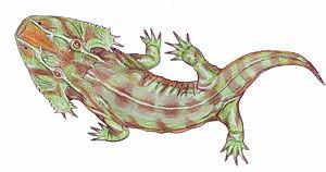 Zatrachys - Zatrachys serratus