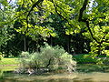 Zugdidi botanical garden4.jpg