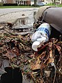 """I prefer the bottled stuff,"" said the storm drain. (25565964563).jpg"