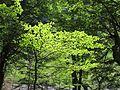 Árboles- Bosque.jpg