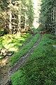 Šumava, vyježděná lesní cesta.jpg