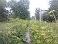 Буйная растительность севера - panoramio.jpg