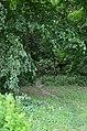 Восточная часть парка Нивки. Фото 19.jpg