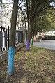 Дерева при музеї Коцюбинського.jpg