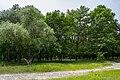 Дерева у Дубовому гаю.jpg