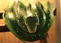 Зелёная змея.JPG
