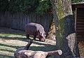 Киевский зоопарк (84).jpg