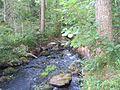 Лесной ручей (A forest spring) - panoramio.jpg