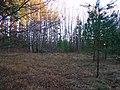 Лет 40 назад тут был хутор Буфалишки - panoramio.jpg
