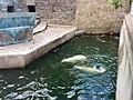Миколаївський зоопарк ведмеді граються.jpg