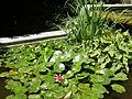 Нікітський ботанічний сад djp911 1.JPG