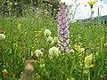 Орхидея и панаска детелина 01.jpg