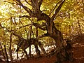 Осінній Чатир-Даг 02.jpg