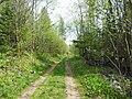Отворот по просеке на Хохловку, конец мая 2013 - panoramio.jpg