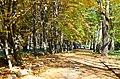 Парк Чекмана у місті Хмельницькому. Фото 5.jpg