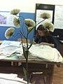 Подготовка гербария.jpg