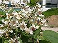 Растения в Седово 242.JPG