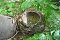 Тернопільська діброва - порожнє пташине гніздо - 16052940.jpg