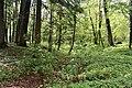 Трускавецький парк 26.jpg