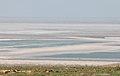 Тюльпаны на фоне озера Баскунчак.jpg