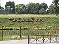 Чаплыгин. Нижний парк (7).jpg