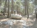 פסל ביער צרעה 13.JPG