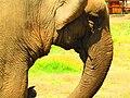 فيل.jpg