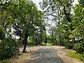 আমার সাথে দেখুন সিংড়া জাতীয় উদ্যান 8.jpg