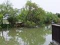 台大生態池 Ecological Pond of National Taiwan University - panoramio.jpg