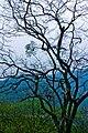 流溪香雪Scenery in GhuangZhou, China - panoramio (6).jpg