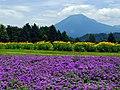 遥か臨む大山 (Tottori Hanakairo Flower Park in summer) 15 Jul, 2012 - panoramio.jpg
