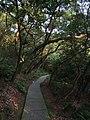 鼓山古道与勇敢者登山道间的连接线 - Gushan Mountain Path - 2014.07 - panoramio.jpg