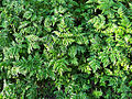 0027 Pflanzen CC0 1.0.jpg