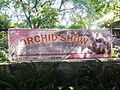 05525jfMidyear Philippine Orchid Show Circle Quezon Cityfvf 31.JPG