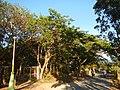0581jfLandscapes Mabalas Diliman Salapungan Paddy fields San Rafael Bulacan Roadsfvf 09.JPG
