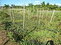 0581jfLandscapes Roads Vegetables Fields Binagbag Angat Bulacanfvf 24.JPG