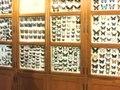 File:15.000 exotische vlinders.ogv