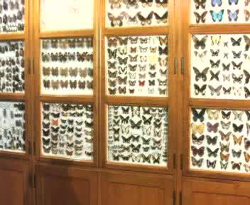 15 000 exotische vlinders ogv