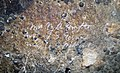 1811 gypsum-filled scratch signatures (Main Cave, Mammoth Cave, Kentucky, USA) (38096010856).jpg