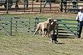 2007 Mendocino County Fair & Apple Show 26.jpg