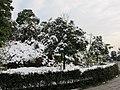 2010年12月15日夜里的那场雪 - panoramio (20).jpg