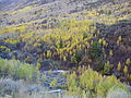2012-10-17 503 Aspens in Lamoille Canyon.jpg