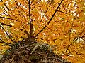 2012-10-24 17-08-56-feuillage-arbre.jpg
