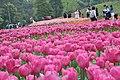 2014-04-04 石象湖 郁金香 liuzusai - panoramio (34).jpg