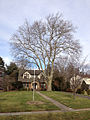 2014-12-30 13 00 36 American Sycamore along Lake Boulevard in Ewing, New Jersey.JPG