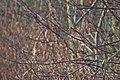 20141207 002 Kessel Weerdbeemden Roodborst (15346881023).jpg
