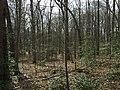2016-03-01 14 40 34 Forest within Fred Crabtree Park in Reston, Fairfax County, Virginia.jpg
