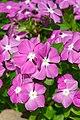 2018-09-19 11-08-14 ILCE-6500 DSC07896 DxO - Flickr - miguel.discart.jpg