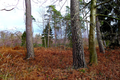 2018-12-22-December-watercolors.-Hike-to-the-Ratingen-forest. File-19.png