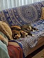 2 Cats on a Couch.jpg
